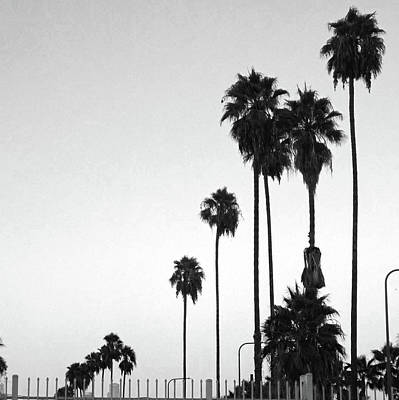 Photograph - A Row Of Palm Trees by Hold Still Photography