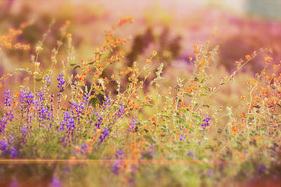 Photograph - A Spring Morning  by Saija Lehtonen