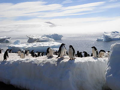 Photograph - Adelie Penguins by Image By Brent R. Carreau