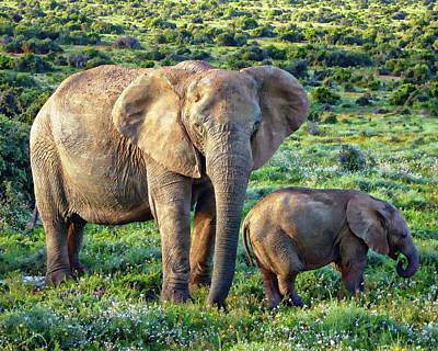 Photograph - African Elephants by Anthony Dezenzio