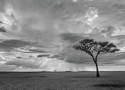 Abstract Graphics - African grasslands infrared by Murray Rudd