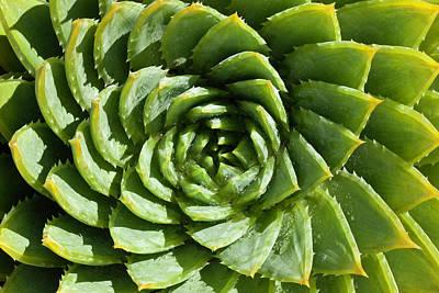 Photograph - Aloe_polyphylla_8536.psd by Mark Shoolery