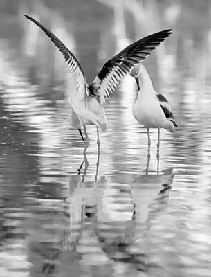 Photograph - American Avocets 8674-110818-2cr-bw by Tam Ryan