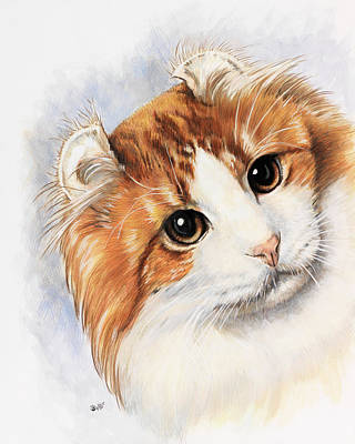Drawing - American Curl by Barbara Keith