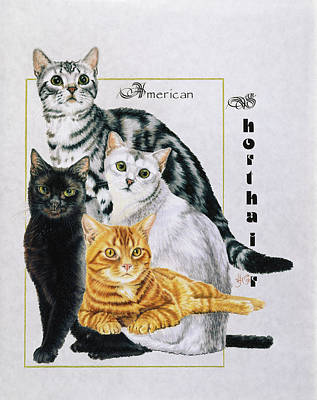 Drawing - American Shorthair by Barbara Keith