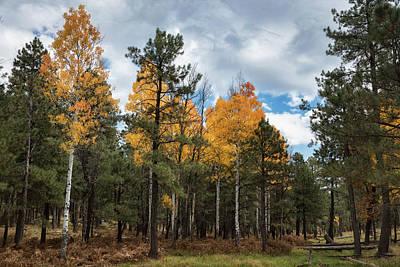 Photograph - An Autumn Walk In The Woods  by Saija Lehtonen