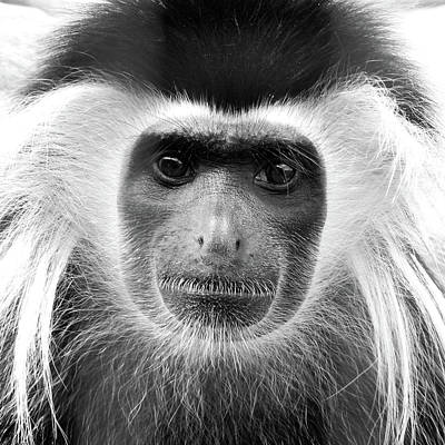 Wall Art - Photograph - Angolan Colobus Monkey by David G Paul