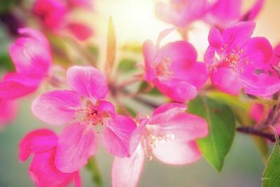 Photograph - Apple Blossom 6 by Leland D Howard