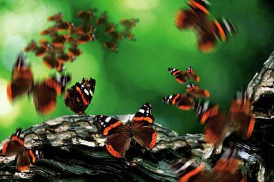 Insect Photograph - Assorted Outdoors Shoots by Digital Camera Magazine