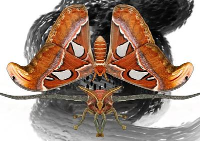 Atlas Moth7 Art Print