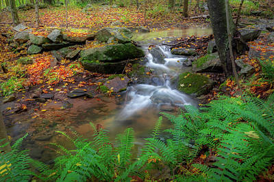 Photograph - Autumn Falling by Bill Wakeley
