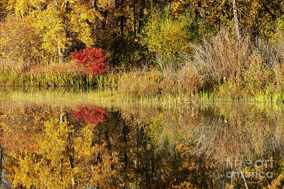 Photograph - Autumn Illusion by Mike Dawson