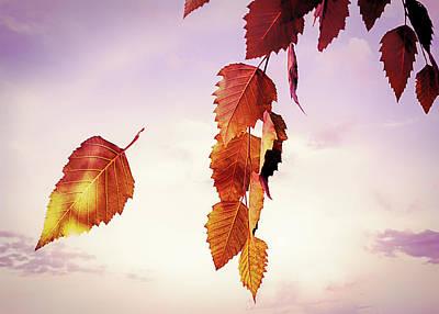 Photograph - Autumn Leaves by Bob Orsillo