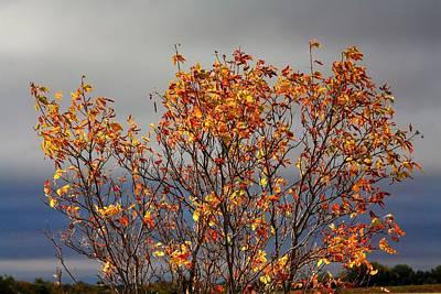 Photograph - Autumn Leaves by David Matthews