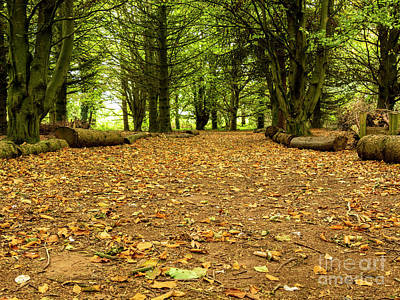 Photograph - Autumn Leaves by Jim Orr