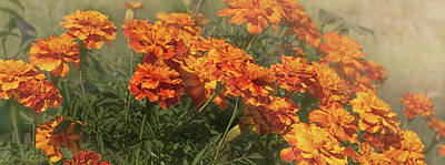 Photograph - Autumn Marigolds by Sheryl Caston
