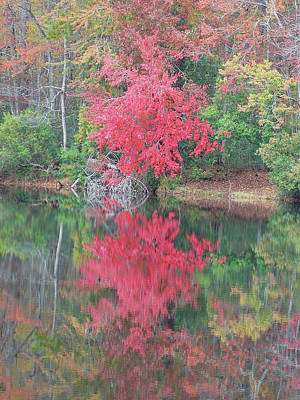 Photograph - Autumn Pink by Matthew Seufer