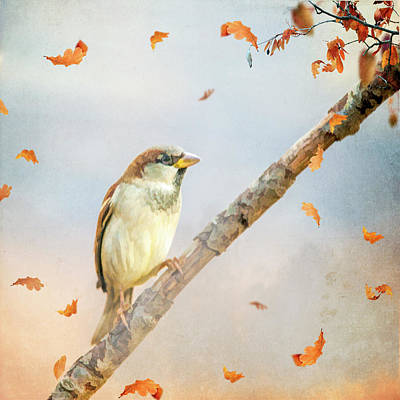 Photograph - Autumn Sparrow by Cathy Kovarik
