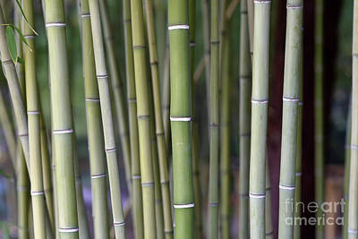 Photograph - Bamboo Grove by George Atsametakis