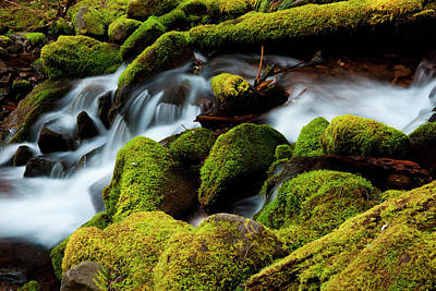 Photograph - Barnes Creek, Olympic National Park by Mint Images/ Art Wolfe