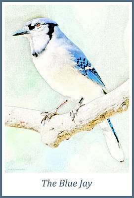 Digital Art - Blue Jay by A Gurmankin
