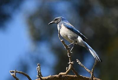 Photograph - Blue On Blue by Fraida Gutovich