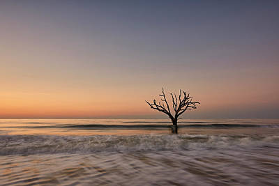 Photograph - Botany Bay Tree by Jon Glaser