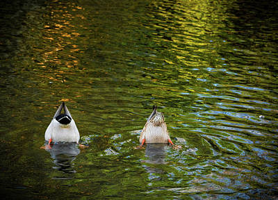 Photograph - Bottoms Up by Jean Noren
