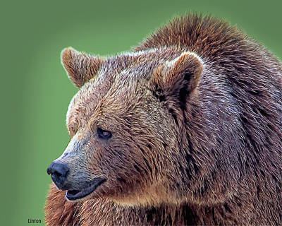 Digital Art - Brown Bear 5 by Larry Linton