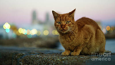 Photograph - Brown Cat And Cathedral By The Sea Cadiz Spain by Pablo Avanzini