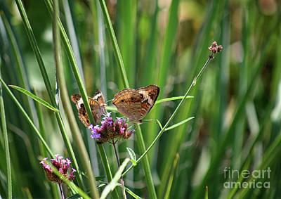 Photograph - Buckeye Butterflies by Karen Adams