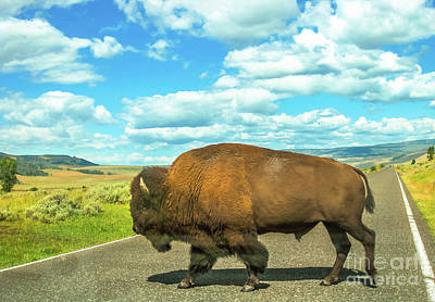 Photograph - Buffalo Crossing In Yellowstone by Benny Marty