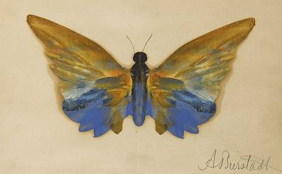 Painting - Butterfly by Albert Bierstadt