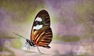 Painting - Butterfly by Elaine Manley