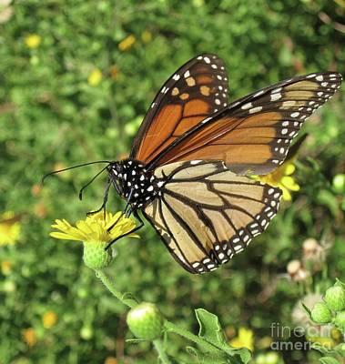 Wall Art - Photograph - Butterfly by Megan Cohen