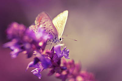 Photograph - Butterfly On Wildflower by Jasmina007