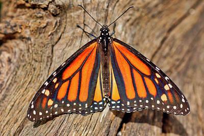 Photograph - Butterfly Wings by Meta Gatschenberger