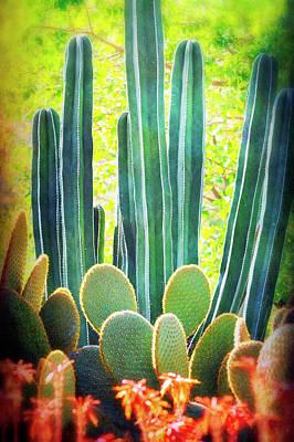 Photograph - Cactus Garden  by Saija Lehtonen
