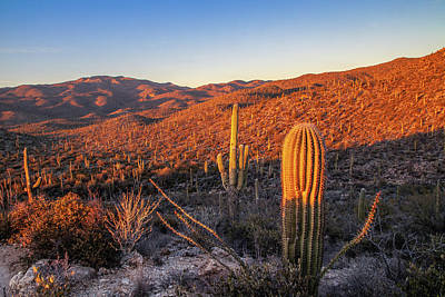 Photograph - Cactus Hills Sunset by Lon Dittrick