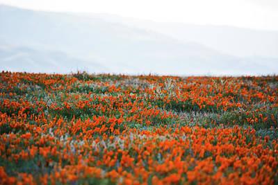 Photograph - California Poppy Reserve by Kyle Hanson