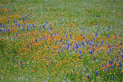 Photograph - Central Valley Wildflowers by Kyle Hanson