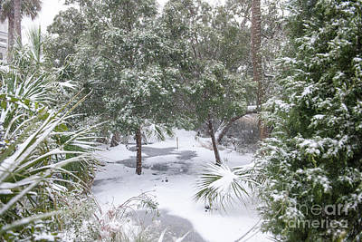 Photograph - Charleston Snow by Dale Powell