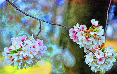 Photograph - Cherry Blossoms Close-up #2 by Bill Jonscher
