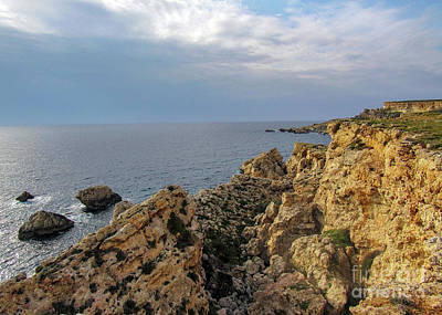 Rabbit Marcus The Great - Cliffs near the Golden bay, Malta by Jekaterina Sahmanova