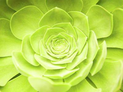 Photograph - Close-up Of Green Succulent Plant by Gspictures