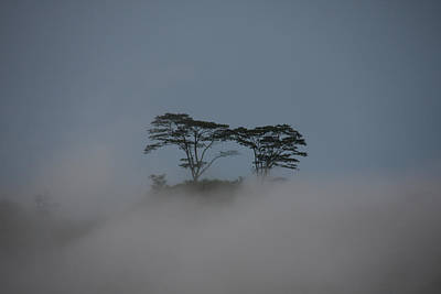 Photograph - Cloud Forest, Sri Lanka by David Hosking