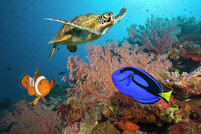 Photograph - Clownfish, Blue Tang And Sea Turtle On by Jeff Hunter