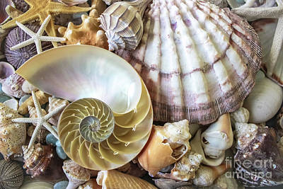 Photograph - Collecting Shells by Colleen Kammerer