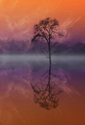 Photograph - Composited Image Of Tree And Reflection by Diane Miller