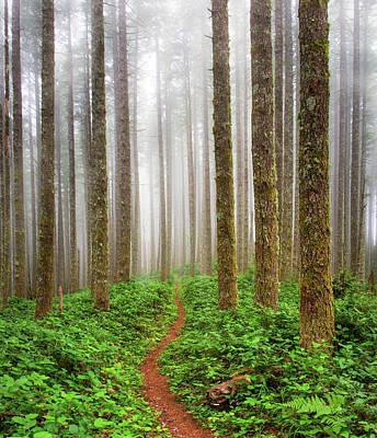 Photograph - Cummins Wilderness Trail by Leland D Howard